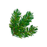 Hand drawn triple fir tree twig, branch, spruce. Christmas decoration element, sketch style vector illustration on white background. Bushy fir tree twig Stock Image