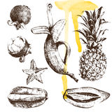 Hand drawn tropical fruits Stock Photos
