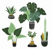 Hand drawn tropical house plants. Scandinavian style illustration, modern and elegant home decor. Vector design flowers. vector illustration