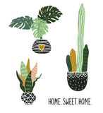 Hand drawn tropical house plants. Vector print design with lettering - `home sweet home`. Stock Photos