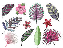 Hand drawn tropical leaves color vector set. Set Leaf and flowers. Exotics. Vintage vector botanical illustration. Royalty Free Stock Image