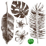Hand drawn tropical leaves and flowers stock illustration