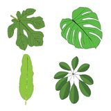 Hand drawn tropical leaves set. Vector illustration Stock Photography