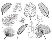 Hand drawn tropical leaves silhouette  set. Set Leaf. Exotics. Vintage  botanical illustration. Stock Images