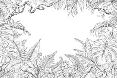 Hand Drawn Tropical Plants Frame. Hand drawn branches and leaves of tropical plants. Monochrome rectangle horizontal floral frame. Monstera, ficus, fern, liana Royalty Free Stock Images