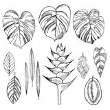 Hand drawn tropical plants. Leaves and flowers. Stock Image