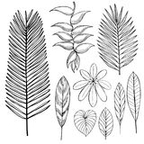 Hand drawn tropical plants. Leaves and flowers.Vector sketch  il Royalty Free Stock Images