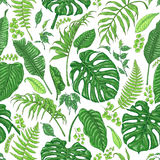 Hand Drawn Tropical Plants Pattern. Hand drawn branches and leaves of tropical plants. Foliage seamless pattern made with  monstera, fern, palm fronds sketch Royalty Free Stock Image