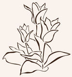 Hand drawn tulip Stock Photography