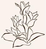 Hand drawn tulip Stock Photography