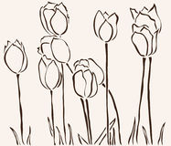 Hand drawn tulips Royalty Free Stock Photography