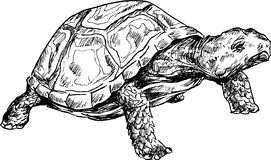Hand drawn turtle Royalty Free Stock Photos