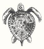 Hand drawn turtle illustration, logo template Royalty Free Stock Photos