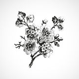 Hand-drawn twig with flowers vintage  background  Stock Photography