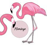 Two pink flamingos. Vector illustration on white background. Flamingo name in the pink circle. Hand drawn two pink flamingos. Vector illustration on white royalty free illustration