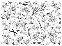 Hand Drawn of Vanilla Flowers and Pods Background. Illustration of Illustration Background Pattern of Hand Drawn Sketch Fragrant Vanilla Flower and Pods Isolated Royalty Free Stock Photography