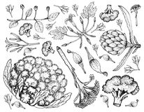 Hand Drawn of Various Vegetables on A White Background Royalty Free Stock Image