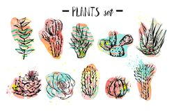 Hand drawn vector abstract graphic creative succulent,cactus and plants collection set colorful artistic brush painted Royalty Free Stock Photography