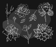 Hand drawn vector abstract graphic flowers collection set with rose,brunches,peony,cacti succulent isolated on black. Background.Outline design elements for Stock Photos