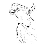 Hand drawn vector abstract graphic ink realistic tropical parrot illustration  on white background.Design for Royalty Free Stock Images