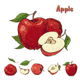 Hand drawn vector apple collection Royalty Free Stock Photography