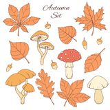 Hand drawn vector autumn set with oak, poplar, beech, maple, aspen and horse chestnut leaves, acorns and mushrooms. Isolated on the white background. Fall stock illustration