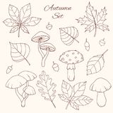 Hand drawn vector autumn set with oak, poplar, beech, maple, aspen and horse chestnut leaves, acorns and mushrooms line art. Isolated on the white background stock illustration