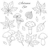 Hand drawn vector autumn set with oak, poplar, beech, maple, aspen and horse chestnut leaves, mushrooms, acorns, physalis outline. Hand drawn vector autumn set vector illustration