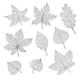 Vector autumn set with oak, poplar, beech, maple, aspen and horse chestnut leaves and physalis gray sketch outline. Hand drawn vector autumn set with oak, poplar stock illustration