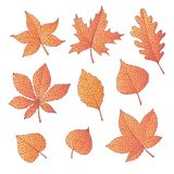 Hand drawn vector autumn set with oak, poplar, beech, maple, aspen and horse chestnut leaves and physalis. Of orange color isolated on the white background royalty free illustration