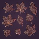 Hand drawn vector autumn set with oak, poplar, beech, maple, aspen and horse chestnut leaves and physalis of orange gradient color. S isolated on the dark stock illustration