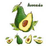 Hand drawn vector avocado collection Royalty Free Stock Images