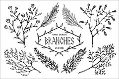 Hand drawn vector branches. Set of hand drawn branches. Design elements  on white.Vector illustration Royalty Free Stock Photos