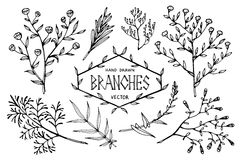 Hand drawn vector branches. Set of hand drawn branches.Isolated on white.Vector illustration Royalty Free Stock Photo
