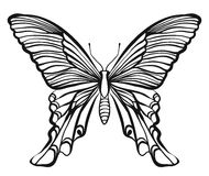 Hand drawn vector butterfly illustration Stock Image