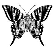 Hand drawn vector butterfly Stock Photos