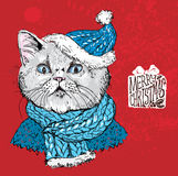 Hand drawn vector of cat with christmas Stock Image