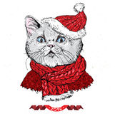 Hand drawn vector of cat with christmas Royalty Free Stock Photo