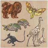 An hand drawn vector collection, pack of animals. Colored line a Royalty Free Stock Images