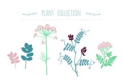 Vector green plants set, botanic collection. Hand drawn vector colorful sketch isolated on white. Doodle Healing for cosmetics, design package, textile Stock Image