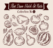 Hand drawn vector doodle set fruits. Vector Stock Photography