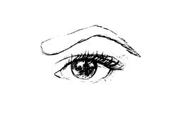 Hand drawn vector eye. Line art. Illustration of a female eye. Make up.Sketch. Black and white Royalty Free Stock Photo
