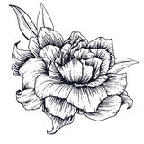 Hand drawn vector flower Royalty Free Stock Images