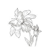 Hand drawn vector with flowers Royalty Free Stock Image