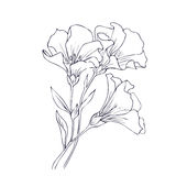 Hand drawn vector with flowers Stock Photos