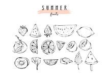 Hand drawn vector graphic summer fruits icons illustration  Stock Photography