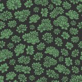 Hand drawn vector green succulents seamless pattern on black background. Floral design. Colorful hand drawn vector green succulents seamless pattern on black Royalty Free Stock Image