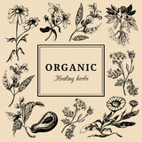 Hand drawn vector herbs. Officinalis, cosmetic plants sketched illustrations. Vintage floral card or poster. Stock Photography