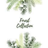 Hand drawn vector illustration - Autumn frame. Forest Spruce bra Royalty Free Stock Images