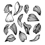 Hand drawn vector illustration - Collection of rose petals. Hand drawn vector illustration - Collection of rose petals vector illustration